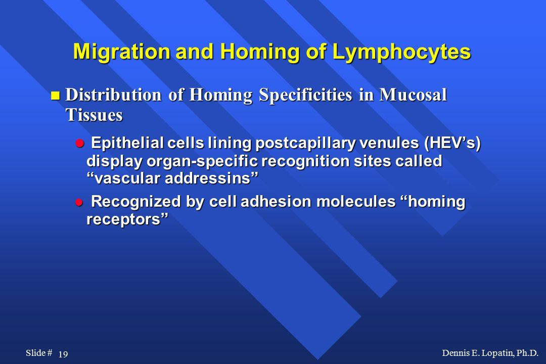 19 Slide #Dennis E. Lopatin, Ph.D.