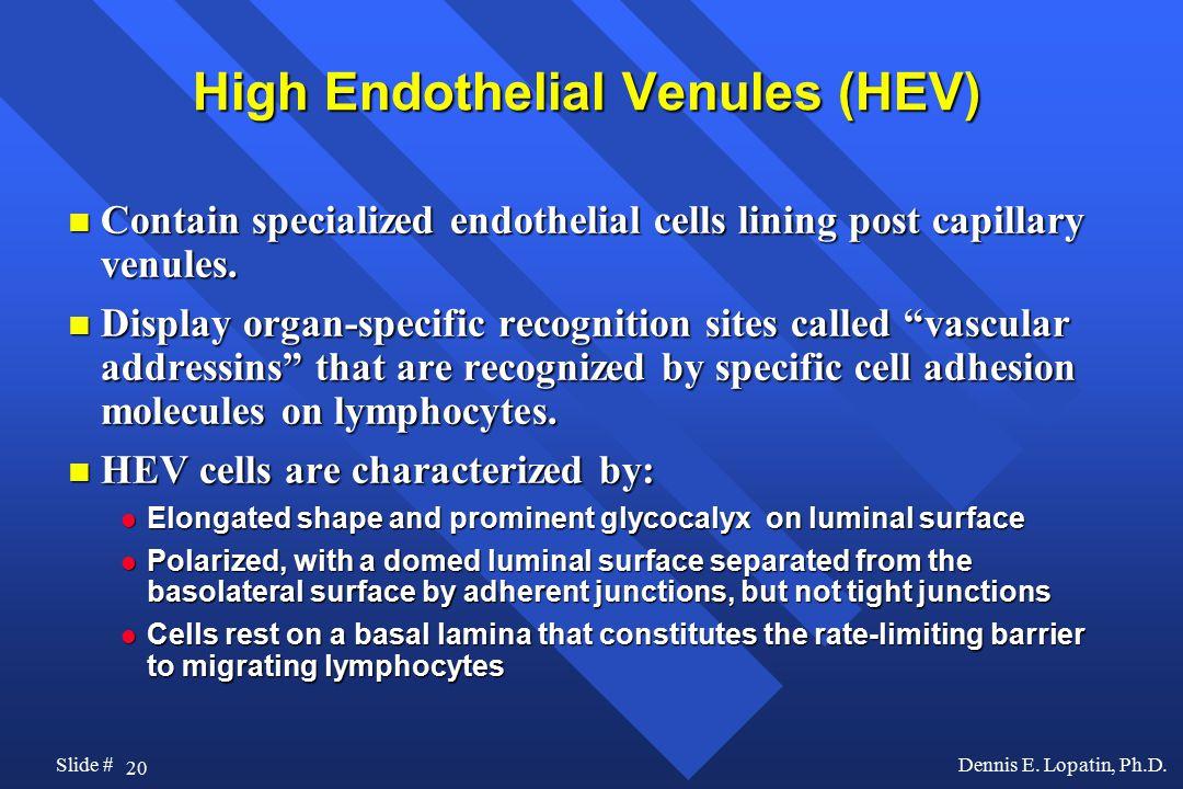 20 Slide #Dennis E. Lopatin, Ph.D.