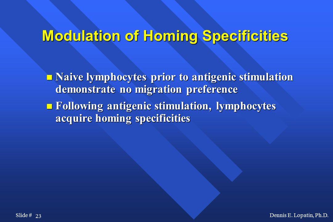 23 Slide #Dennis E. Lopatin, Ph.D.