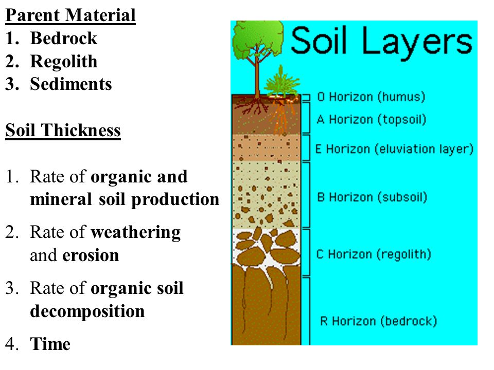 Parent Material 1.Bedrock 2.Regolith 3.Sediments Soil Thickness 1.Rate of organic and mineral soil production 2.Rate of weathering and erosion 3.Rate of organic soil decomposition 4.Time