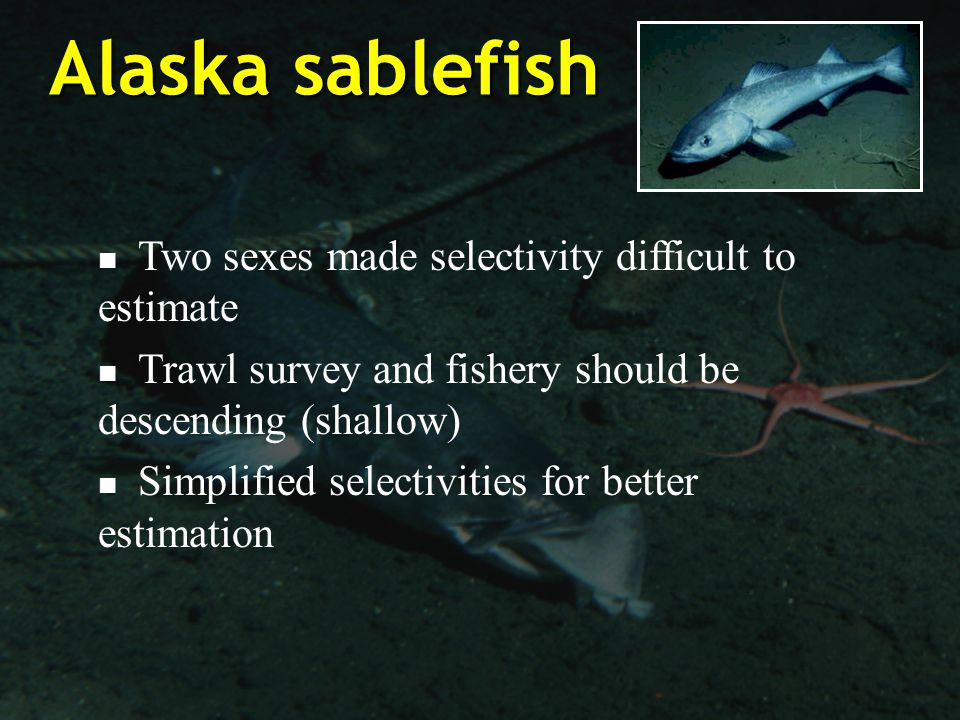 Alaska sablefish Two sexes made selectivity difficult to estimate Trawl survey and fishery should be descending (shallow) Simplified selectivities for better estimation