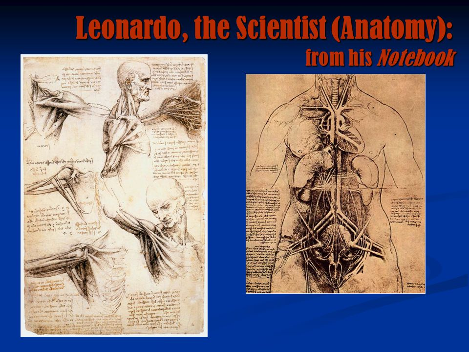 Leonardo, the Scientist (Anatomy): from his Notebook
