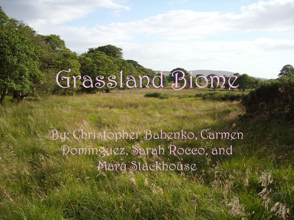 Grassland Geological Features Its large community covered with plants, rich soil, and grasses and contains a few trees.