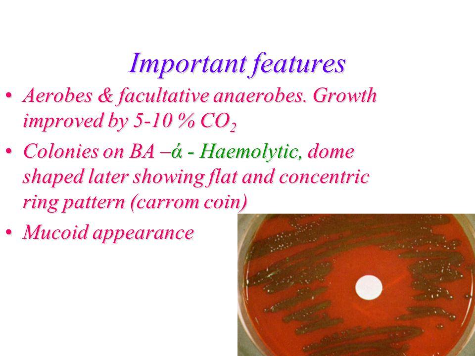 Important features Catalase & oxidase negativeCatalase & oxidase negative Bile solubleBile soluble Inulin fermentationInulin fermentation Optochin (ethyl dihydrocuprein) sensitiveOptochin (ethyl dihydrocuprein) sensitive Pathogenic to micePathogenic to mice
