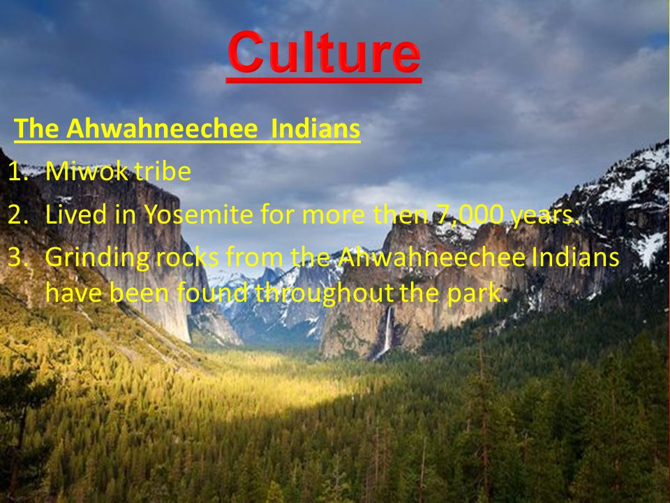 The Ahwahneechee Indians 1.Miwok tribe 2.Lived in Yosemite for more then 7,000 years. 3.Grinding rocks from the Ahwahneechee Indians have been found t
