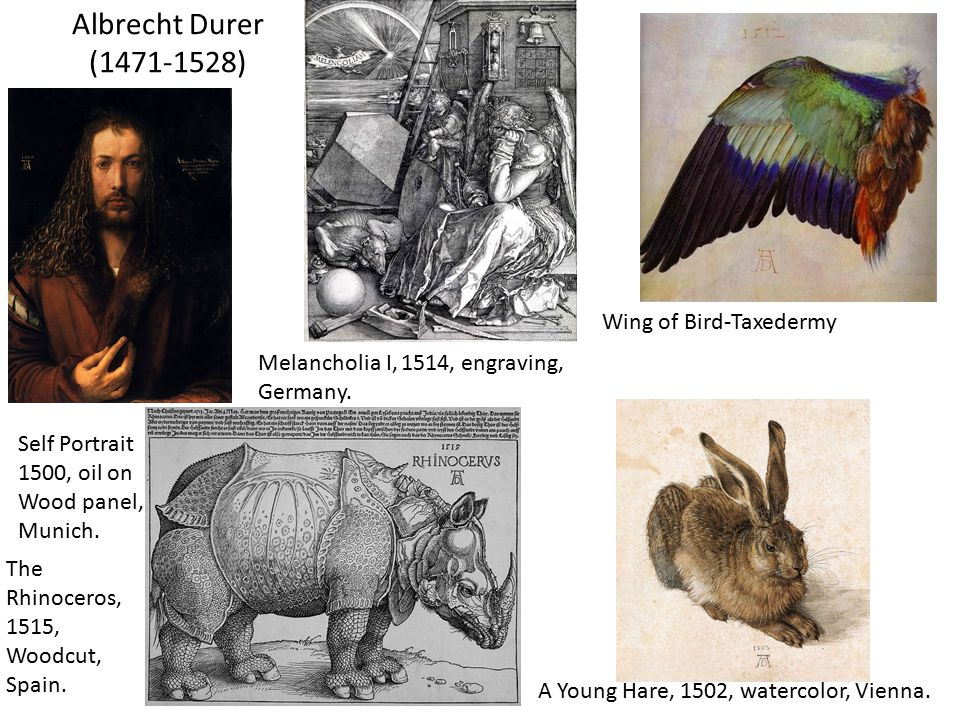 Albrecht Durer (1471-1528) Self Portrait 1500, oil on Wood panel, Munich. Wing of Bird-Taxedermy The Rhinoceros, 1515, Woodcut, Spain. A Young Hare, 1