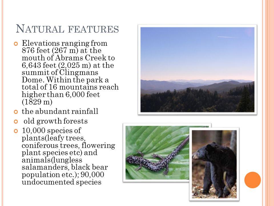 N ATURAL FEATURES Fur forest Base of Big Laurel Falls