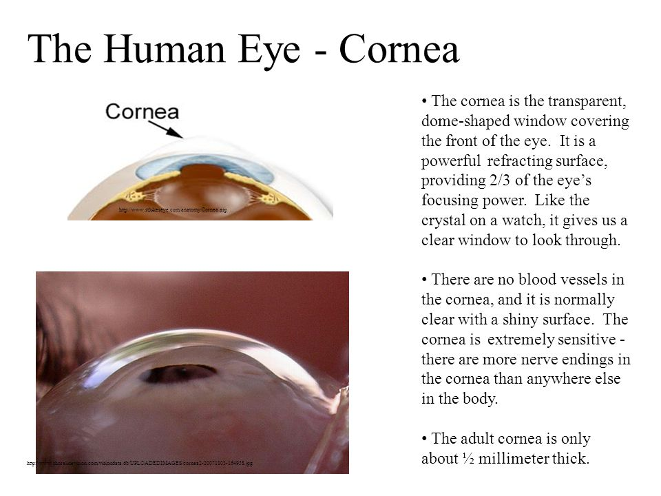 The cornea is the transparent, dome-shaped window covering the front of the eye.