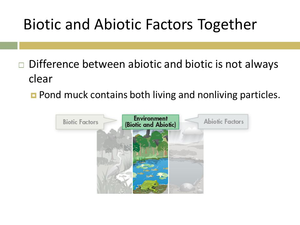 Biotic and Abiotic Factors Together  Difference between abiotic and biotic is not always clear  Pond muck contains both living and nonliving particl