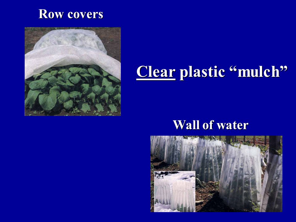 Row covers Wall of water Clear plastic mulch