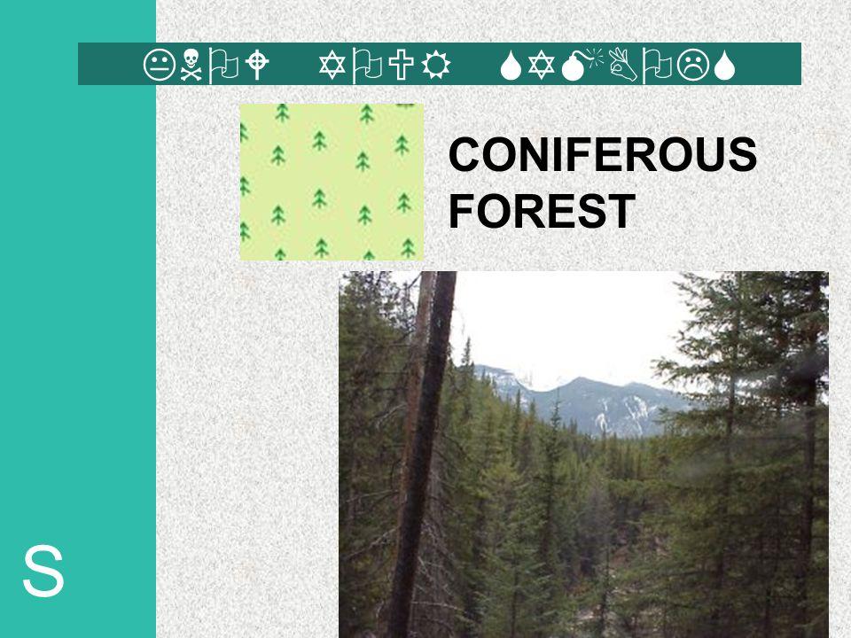 S CONIFEROUS FOREST