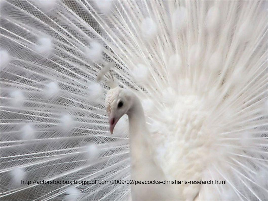 http://actorstoolbox.blogspot.com/2009/02/peacocks-christians-research.html