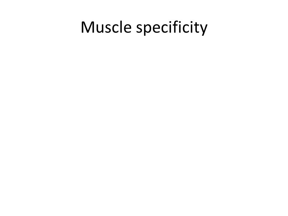 Muscle specificity