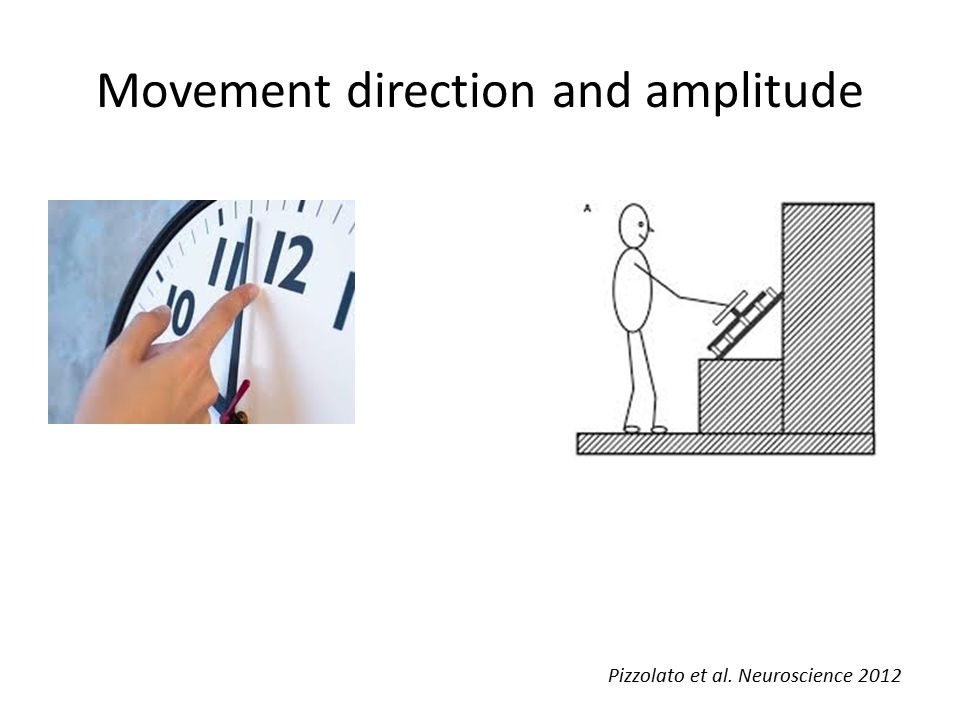 Movement direction and amplitude Pizzolato et al. Neuroscience 2012