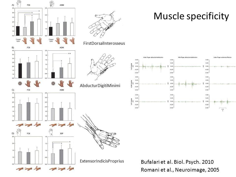 Muscle specificity Romani et al., Neuroimage, 2005 FirstDorsalInterosseus AbducturDigitiMinimi ExtensorIndicisProprius Bufalari et al.