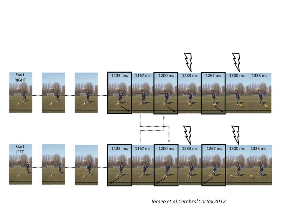 Tomeo et al.Cerebral Cortex 2012