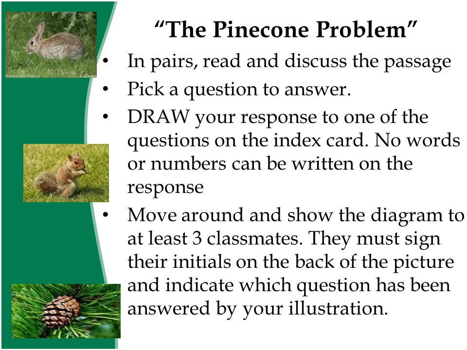 """""""The Pinecone Problem"""" In pairs, read and discuss the passage Pick a question to answer. DRAW your response to one of the questions on the index card."""