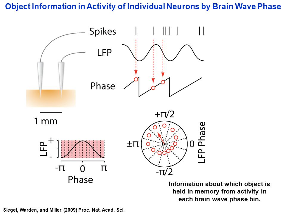 Information about which object is held in memory from activity in each brain wave phase bin.