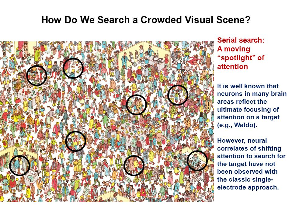 """How Do We Search a Crowded Visual Scene? Serial search: A moving """"spotlight"""" of attention It is well known that neurons in many brain areas reflect th"""