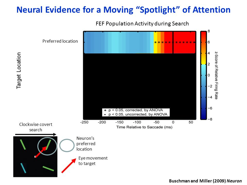 FEF Population Activity during Search Preferred location Neuron's preferred location Eye movement to target Clockwise covert search Neural Evidence fo