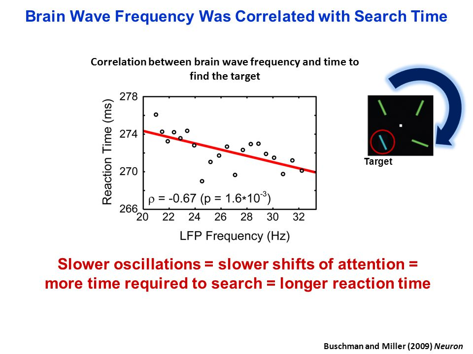 Brain Wave Frequency Was Correlated with Search Time Target Slower oscillations = slower shifts of attention = more time required to search = longer reaction time Buschman and Miller (2009) Neuron Correlation between brain wave frequency and time to find the target