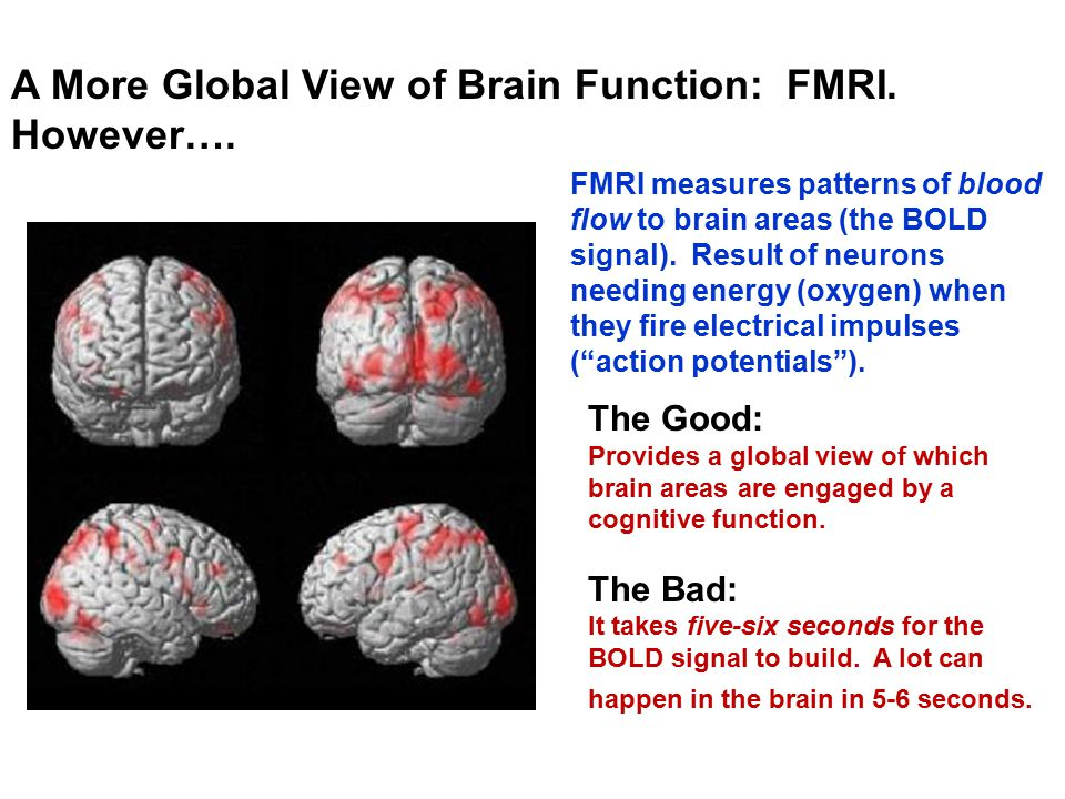 A More Global View of Brain Function: FMRI. However…. FMRI measures patterns of blood flow to brain areas (the BOLD signal). Result of neurons needing