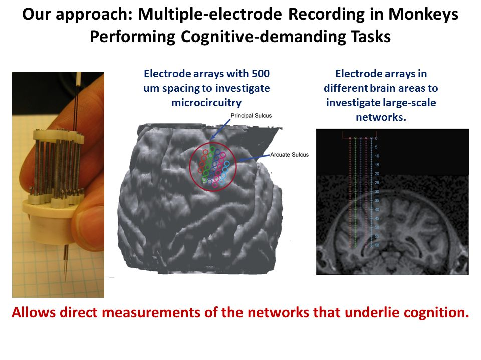Our approach: Multiple-electrode Recording in Monkeys Performing Cognitive-demanding Tasks Electrode arrays with 500 um spacing to investigate microcircuitry Electrode arrays in different brain areas to investigate large-scale networks.