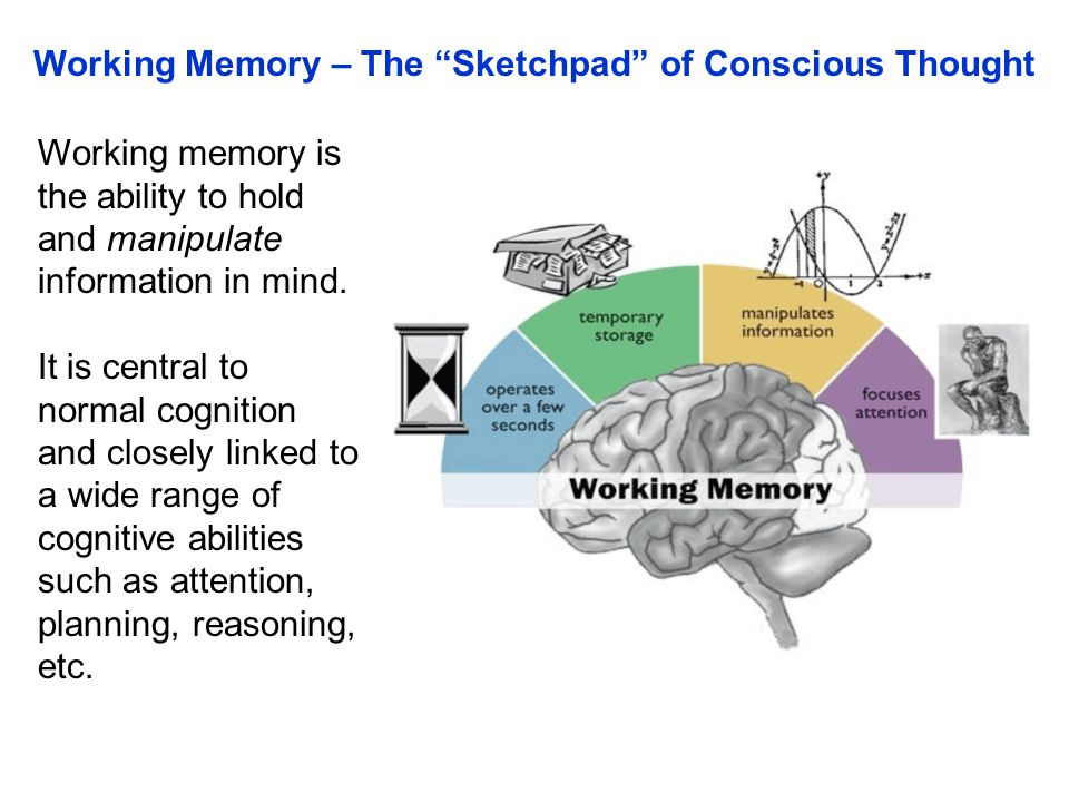 Working memory is the ability to hold and manipulate information in mind. It is central to normal cognition and closely linked to a wide range of cogn