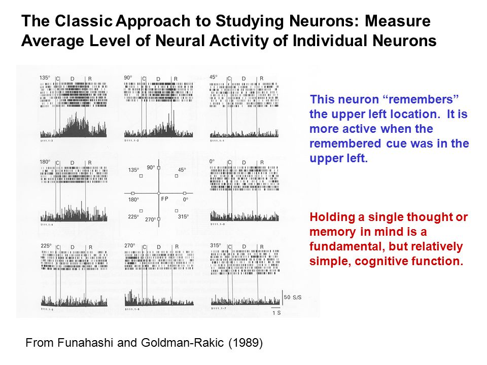 The Classic Approach to Studying Neurons: Measure Average Level of Neural Activity of Individual Neurons From Funahashi and Goldman-Rakic (1989) This