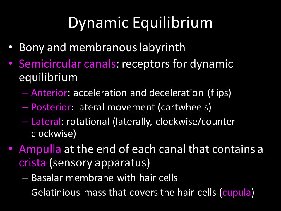 Dynamic Equilibrium Bony and membranous labyrinth Semicircular canals: receptors for dynamic equilibrium – Anterior: acceleration and deceleration (flips) – Posterior: lateral movement (cartwheels) – Lateral: rotational (laterally, clockwise/counter- clockwise) Ampulla at the end of each canal that contains a crista (sensory apparatus) – Basalar membrane with hair cells – Gelatinious mass that covers the hair cells (cupula)
