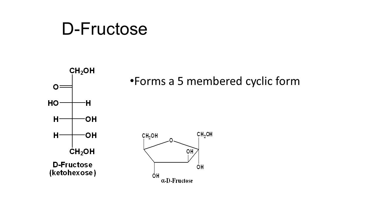 D-Fructose Forms a 5 membered cyclic form