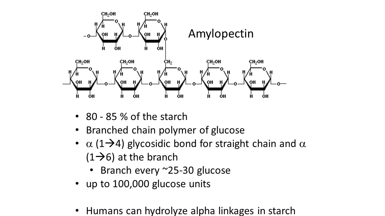 Amylopectin 80 - 85 % of the starch Branched chain polymer of glucose  (1  4) glycosidic bond for straight chain and  (1  6) at the branch Branch every ~25-30 glucose up to 100,000 glucose units Humans can hydrolyze alpha linkages in starch