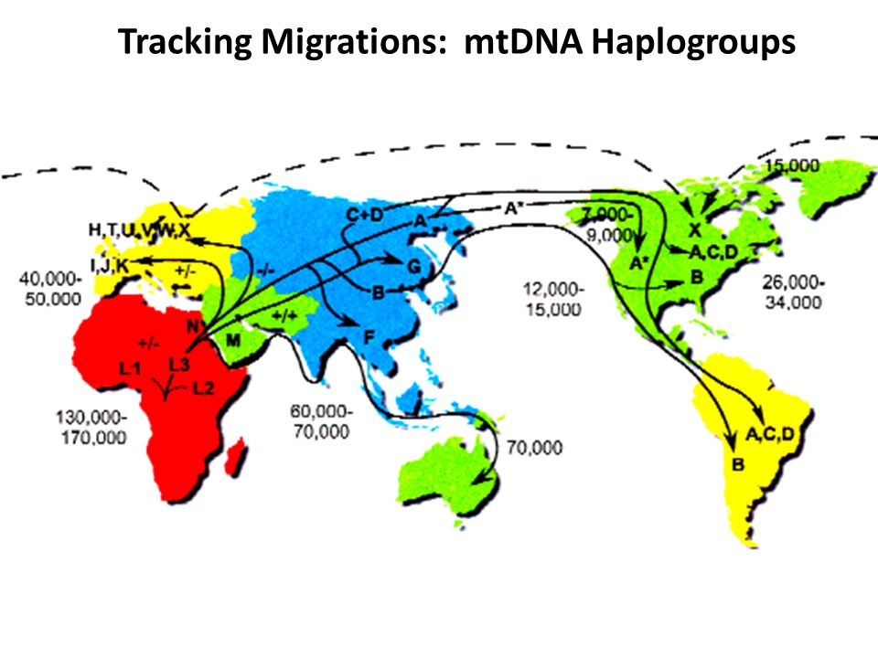 Tracking Migrations: mtDNA Haplogroups