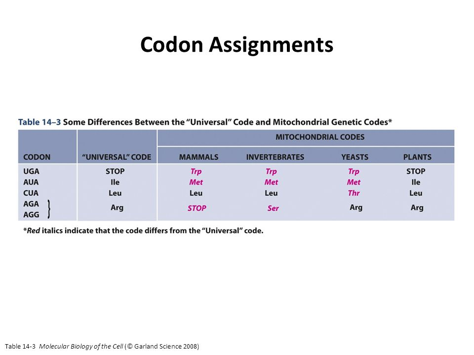 Table 14-3 Molecular Biology of the Cell (© Garland Science 2008) Codon Assignments