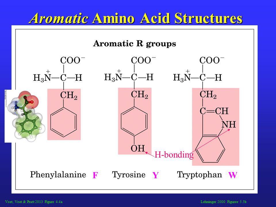 Lehninger 2000 Figuree 5.5b Aromatic Amino Acid Structures FYW H-bonding Voet, Voet & Pratt 2013 Figure 4.4a