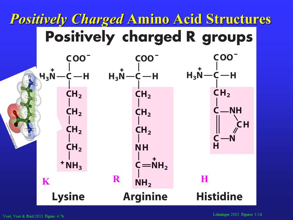 Lehninger 2005 Figuree 3.5d Positively Charged Amino Acid Structures Voet, Voet & Pratt 2013 Figure 4.7b K RH