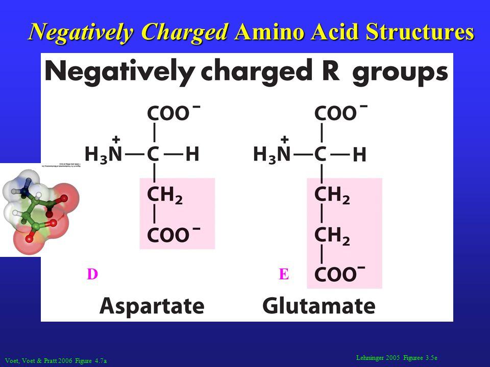 Lehninger 2005 Figuree 3.5e Negatively Charged Amino Acid Structures Voet, Voet & Pratt 2006 Figure 4.7a DE