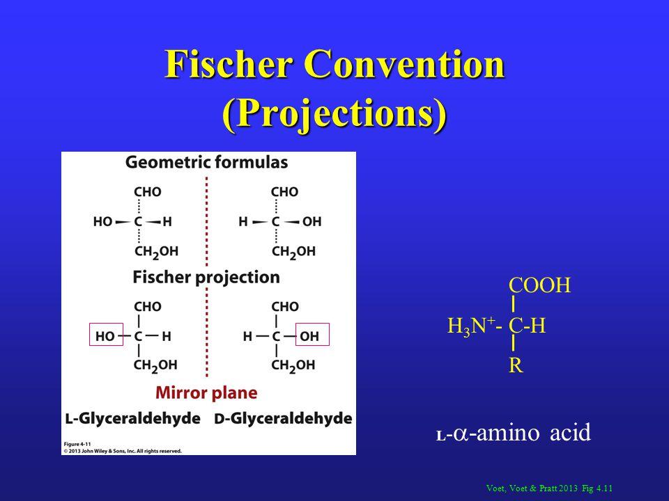 Fischer Convention (Projections) Voet, Voet & Pratt 2013 Fig 4.11 COOH H 3 N + -C-H R L -  -amino acid