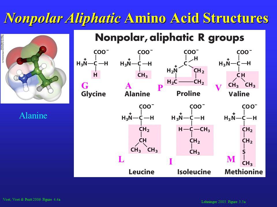 Lehninger 2005 Figure 3.5a Nonpolar Aliphatic Amino Acid Structures L Alanine Voet, Voet & Pratt 2006 Figure 4.4a M I GA V L P