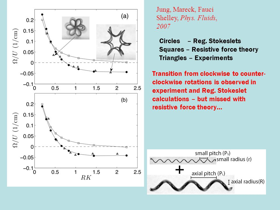 Circles – Reg. Stokeslets Squares – Resistive force theory Triangles – Experiments Transition from clockwise to counter- clockwise rotations is observ