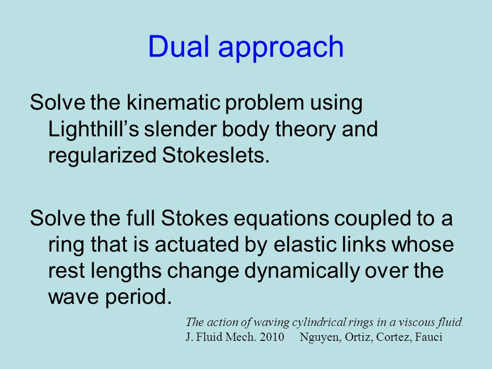 Dual approach Solve the kinematic problem using Lighthill's slender body theory and regularized Stokeslets.