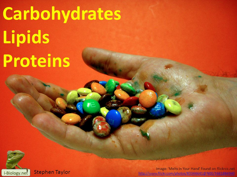 Image: 'Melts In Your Hand' Found on flickrcc.net http://www.flickr.com/photos/83346641@N00/3661884940 Carbohydrates Lipids Proteins Stephen Taylor