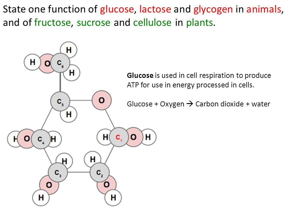 State one function of glucose, lactose and glycogen in animals, and of fructose, sucrose and cellulose in plants. Glucose is used in cell respiration