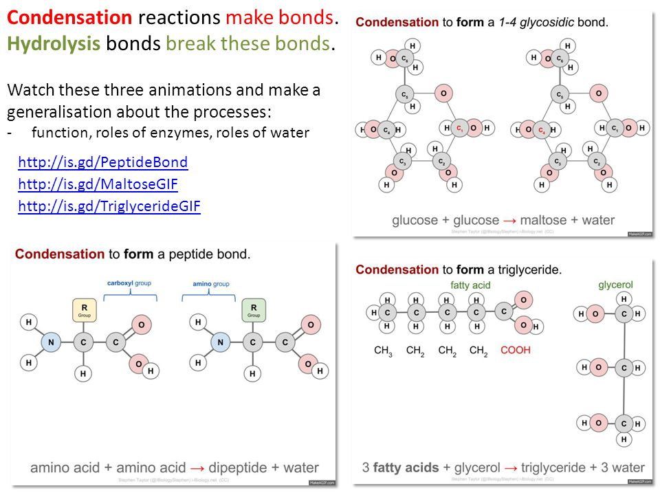 Condensation reactions make bonds. Hydrolysis bonds break these bonds. Watch these three animations and make a generalisation about the processes: -fu