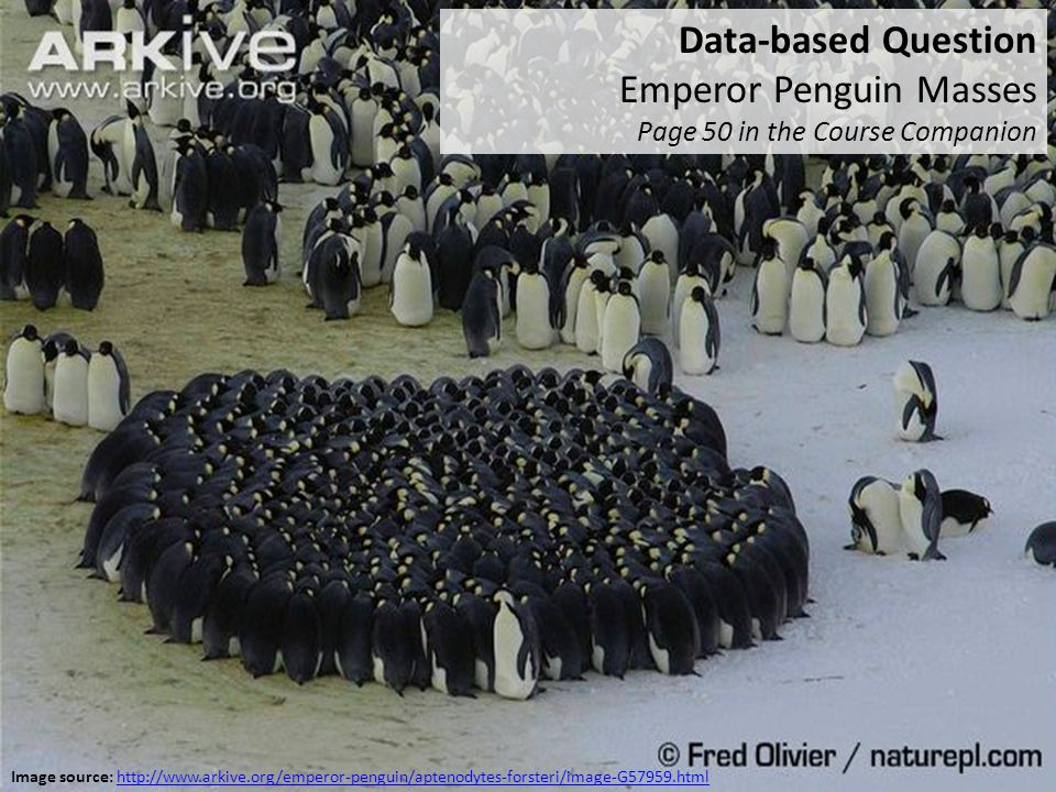 Data-based Question Emperor Penguin Masses Page 50 in the Course Companion Image source: http://www.arkive.org/emperor-penguin/aptenodytes-forsteri/im