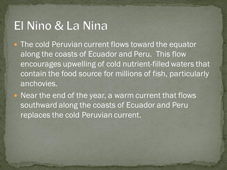 The cold Peruvian current flows toward the equator along the coasts of Ecuador and Peru.