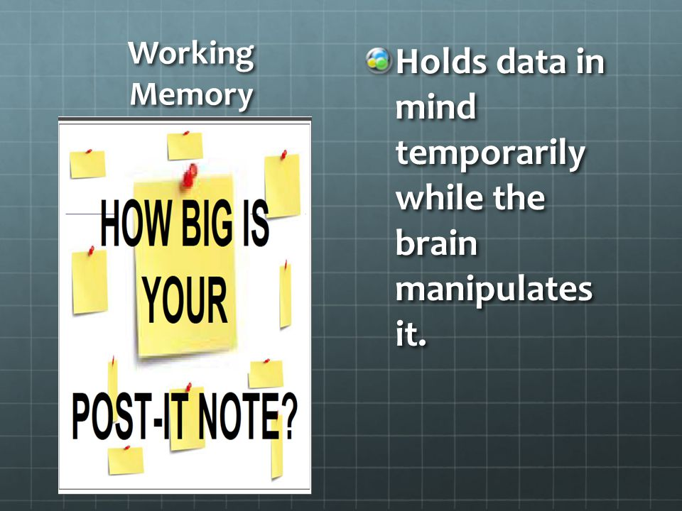 Holds data in mind temporarily while the brain manipulates it.