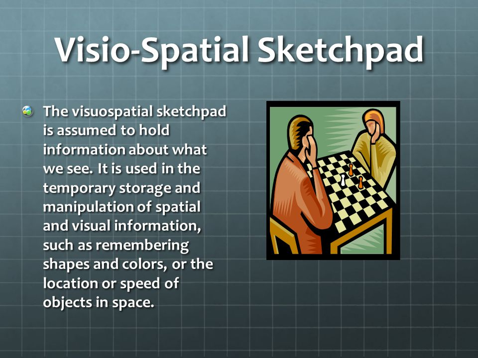Visio-Spatial Sketchpad The visuospatial sketchpad is assumed to hold information about what we see.