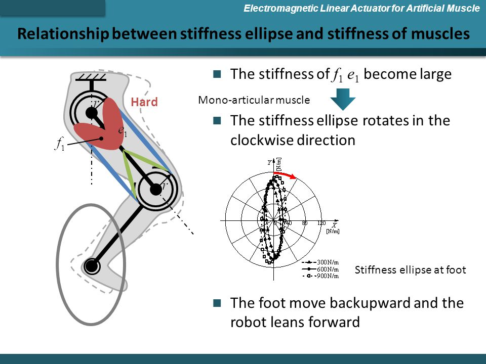 Relationship between stiffness ellipse and stiffness of muscles Electromagnetic Linear Actuator for Artificial Muscle The stiffness of f 1 e 1 become large The stiffness ellipse rotates in the clockwise direction The foot move backupward and the robot leans forward Hard Stiffness ellipse at foot Mono-articular muscle