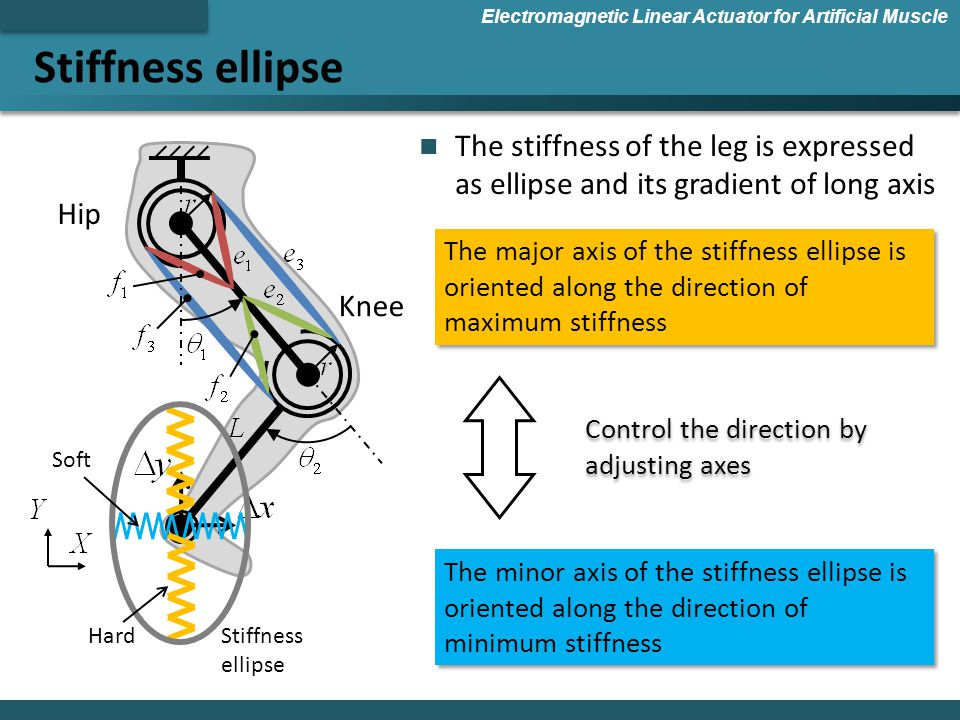 Stiffness ellipse Electromagnetic Linear Actuator for Artificial Muscle Hip Knee Control the direction by adjusting axes The stiffness of the leg is expressed as ellipse and its gradient of long axis Stiffness ellipse Hard Soft The major axis of the stiffness ellipse is oriented along the direction of maximum stiffness The minor axis of the stiffness ellipse is oriented along the direction of minimum stiffness